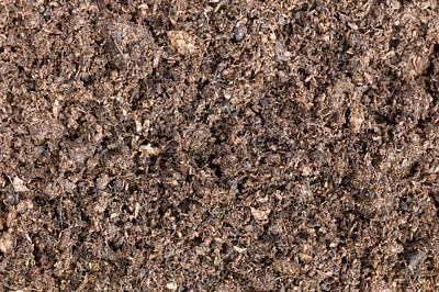 The Structure Of Peat-based Compost Poster