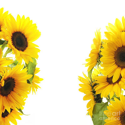 The Sunflower Poster by Boon Mee