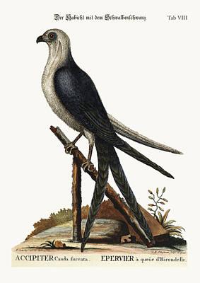 The Swallow-tail Hawk Poster by Splendid Art Prints