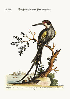 The Swallow-tailed Kingfisher Poster by Splendid Art Prints
