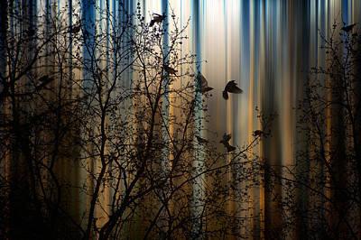 The Thorn Birds Poster by Marek Czaja