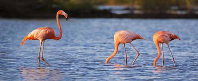 The Three Flamingos Poster