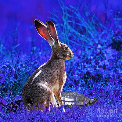 The Tortoise And The Hare . Blue Square Poster by Wingsdomain Art and Photography
