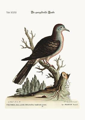 The Transverse Stripe Or Bared Dove Poster by Splendid Art Prints