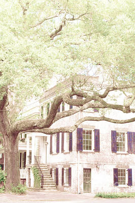 The Tree In The Front Poster by Margie Hurwich