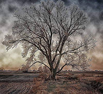 The Tree Of Life Poster by Kimberleigh Ladd