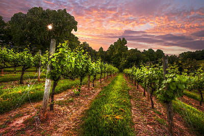 The Vineyard At Sunset Poster by Debra and Dave Vanderlaan