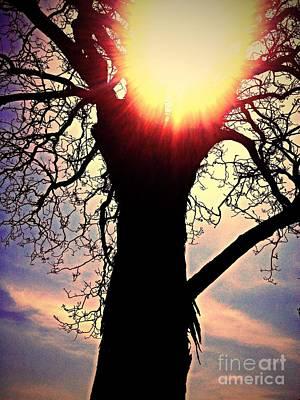 The Walnut Tree Poster