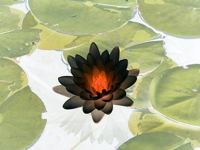 Poster featuring the photograph The Water Lilies Collection - Photopower 1034 by Pamela Critchlow