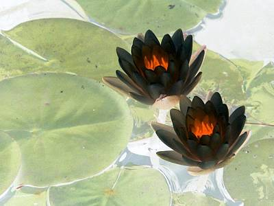 Poster featuring the photograph The Water Lilies Collection - Photopower 1039 by Pamela Critchlow