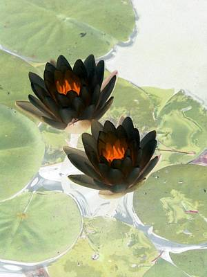 Poster featuring the photograph The Water Lilies Collection - Photopower 1040 by Pamela Critchlow