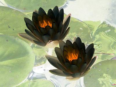 Poster featuring the photograph The Water Lilies Collection - Photopower 1041 by Pamela Critchlow