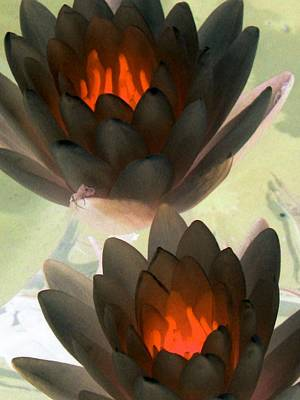 Poster featuring the photograph The Water Lilies Collection - Photopower 1042 by Pamela Critchlow