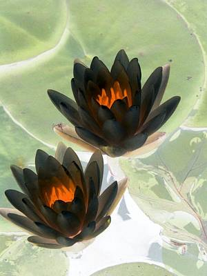 Poster featuring the photograph The Water Lilies Collection - Photopower 1046 by Pamela Critchlow