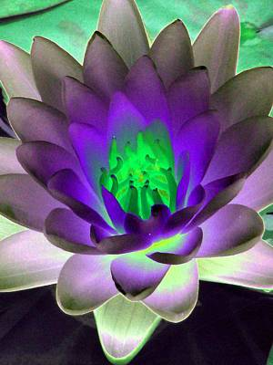 Poster featuring the photograph The Water Lilies Collection - Photopower 1115 by Pamela Critchlow