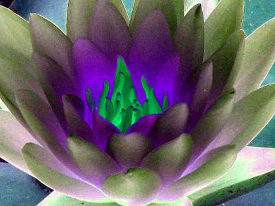 Poster featuring the photograph The Water Lilies Collection - Photopower 1117 by Pamela Critchlow