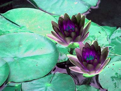 Poster featuring the photograph The Water Lilies Collection - Photopower 1118 by Pamela Critchlow