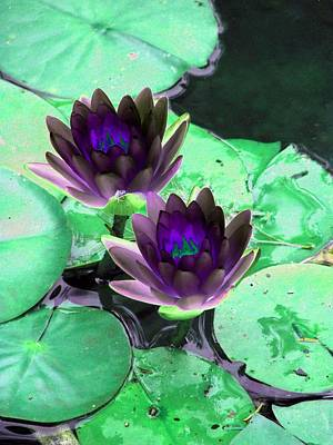 Poster featuring the photograph The Water Lilies Collection - Photopower 1119 by Pamela Critchlow
