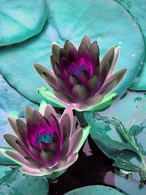 Poster featuring the photograph The Water Lilies Collection - Photopower 1124 by Pamela Critchlow