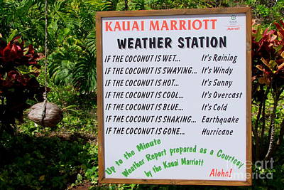 The Weather Report Poster by Mary Deal