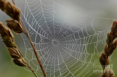 Poster featuring the photograph The Web by Kerri Farley