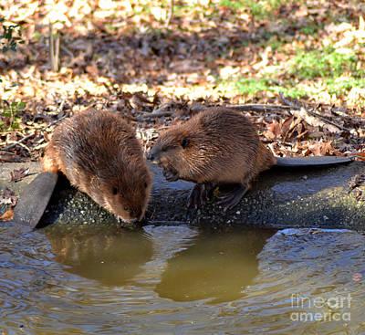 The Whispering Beaver Poster