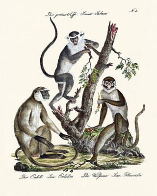 The White-nosed Monkey Poster