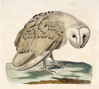 The White Owl Poster by British Library