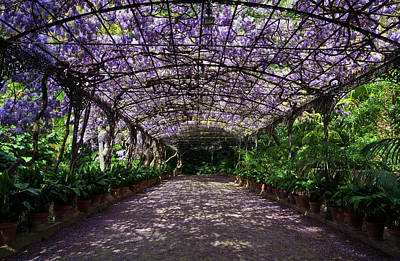 The Wisteria Arbour In Full Bloom Poster