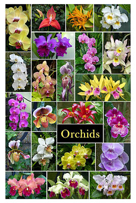 The Wonderful World Of Orchids Poster by Cindy McDaniel
