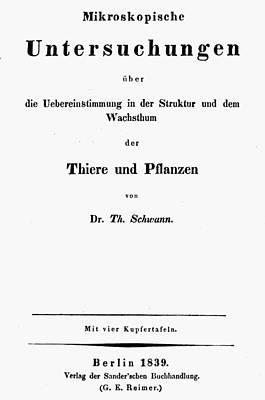 Theodor Schwann (1810-1882) Poster