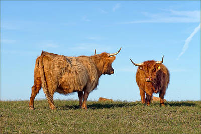 There Can Be Only One Highland Cow Poster