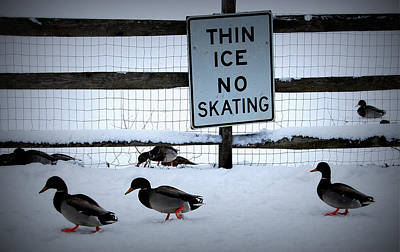 Thin Ice  Poster by Judy Gallagher