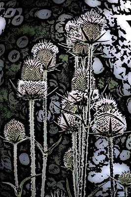 Poster featuring the digital art Thistle  by David Lane
