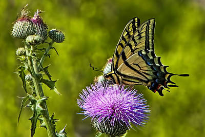 Poster featuring the photograph Thistle Do Just Fine by Gary Holmes