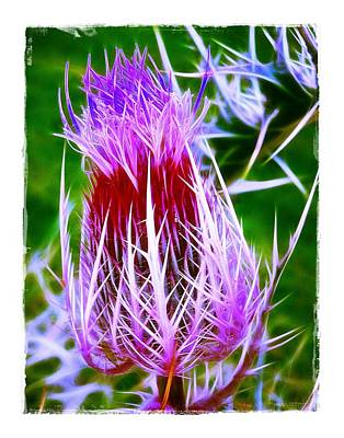 Poster featuring the photograph Thistle by Judi Bagwell