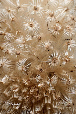 Thistle Seed Head Poster by E B Schmidt