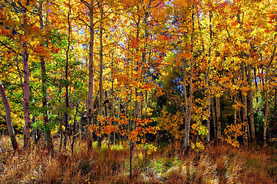Thomas Creek Fall Color Poster by Scott McGuire