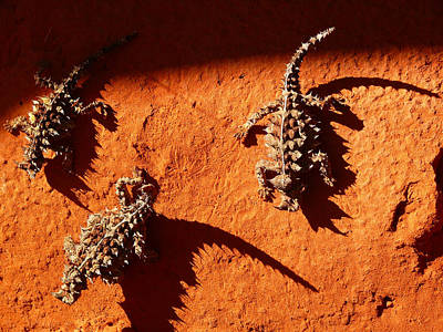 Thorny Devils Poster by Evelyn Tambour