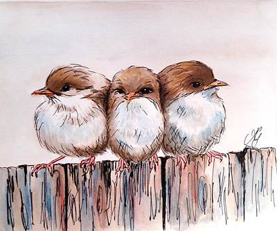Three Baby Fairy Wrens Poster