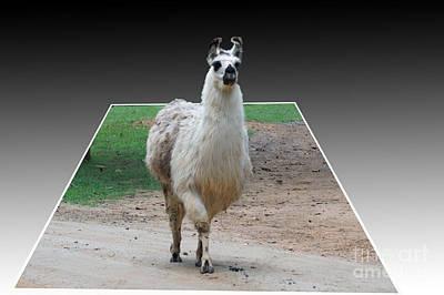 Three D Lama Poster by B Wayne Mullins