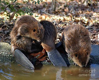 Three Little Beavers Poster by Eva Thomas