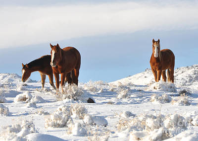 Three Mustangs In Snow Poster