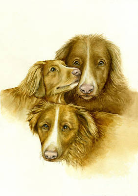 Three Toller Dogs Poster by Nan Wright