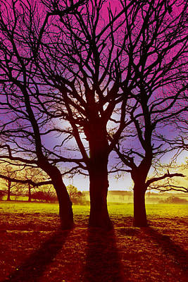 Poster featuring the digital art Three Trees by David Davies