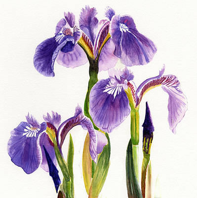 Three Wild Irises Square Design Poster