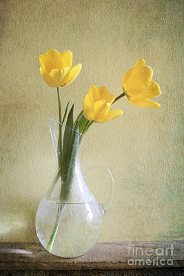 Three Yellow Tulips Poster by Diana Kraleva