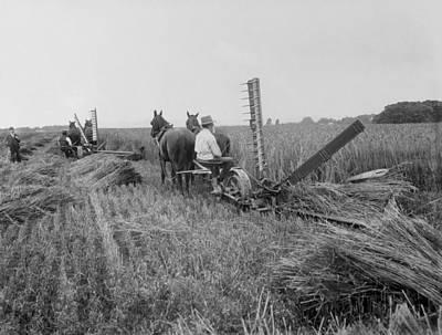 Threshing Hay - 1893 Poster by Daniel Hagerman