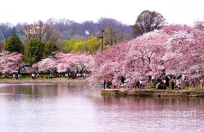 Tidal Basin Cherry Trees And Arlington House Poster by Patti Whitten