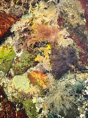 Tidal Pool Color Poster by Debbie Green